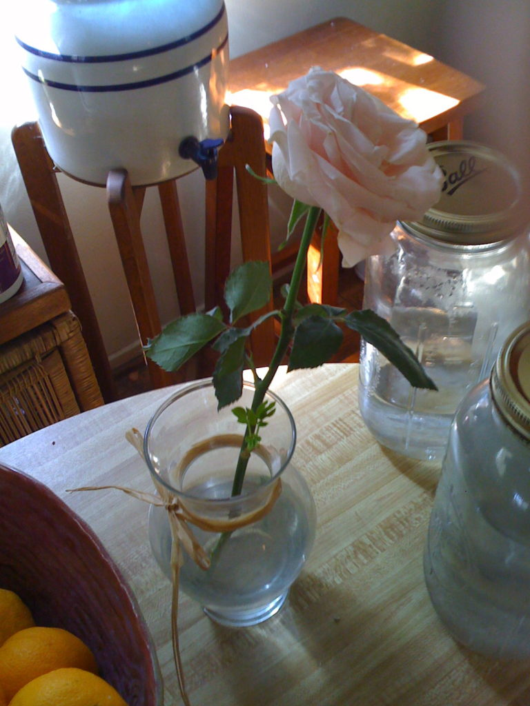 What you see here is a cut flower that has been in a vase for THREE WEEKS !